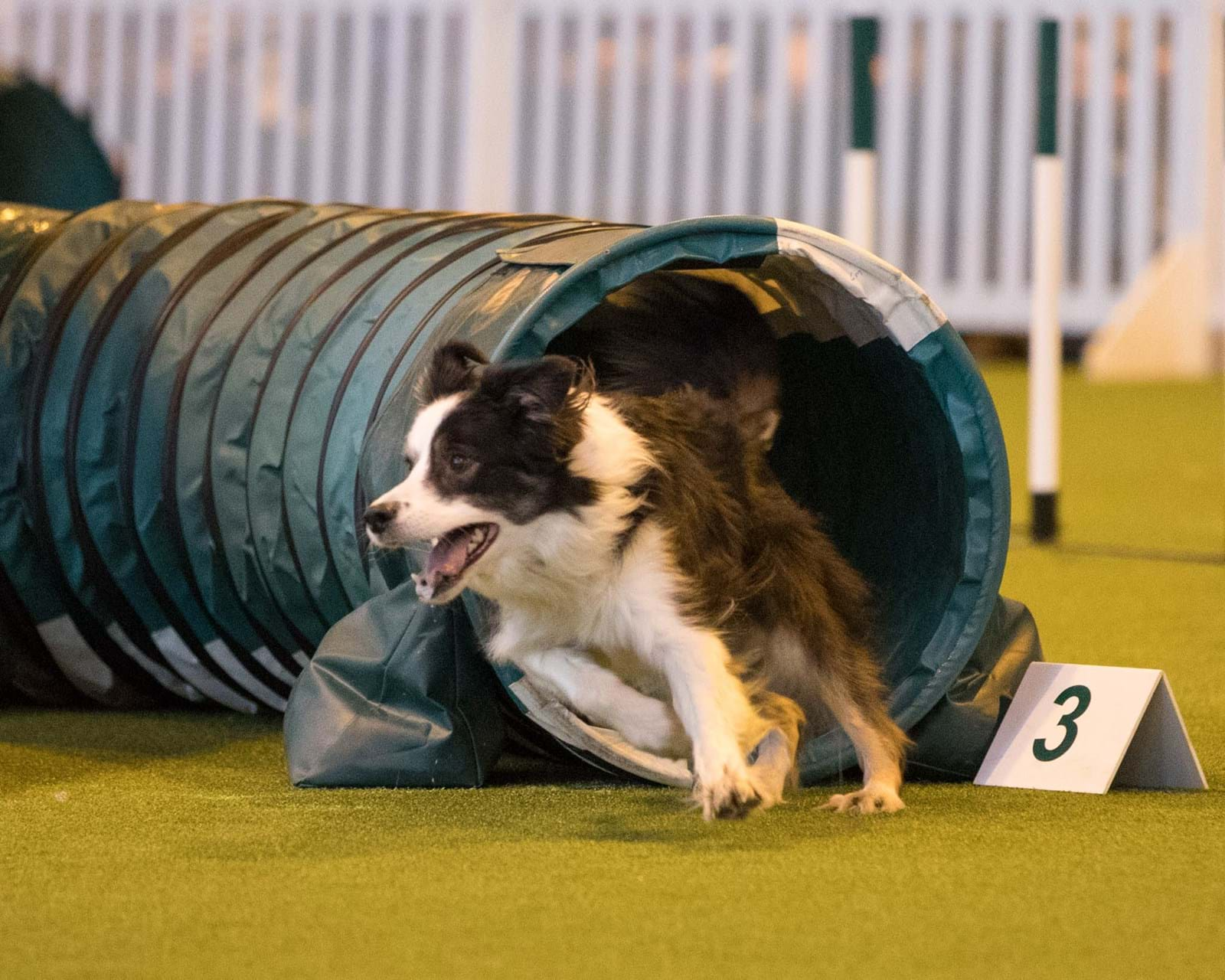 CHANNEL 4 UPS 2018 CRUFTS COVERAGE